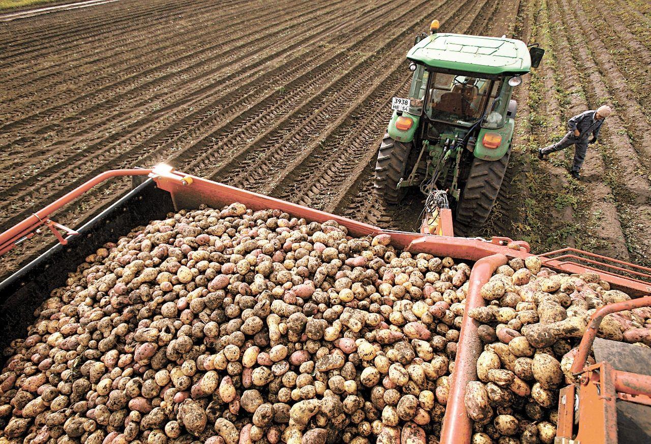 Для ведения сельскохозяйственного производства что можно делать